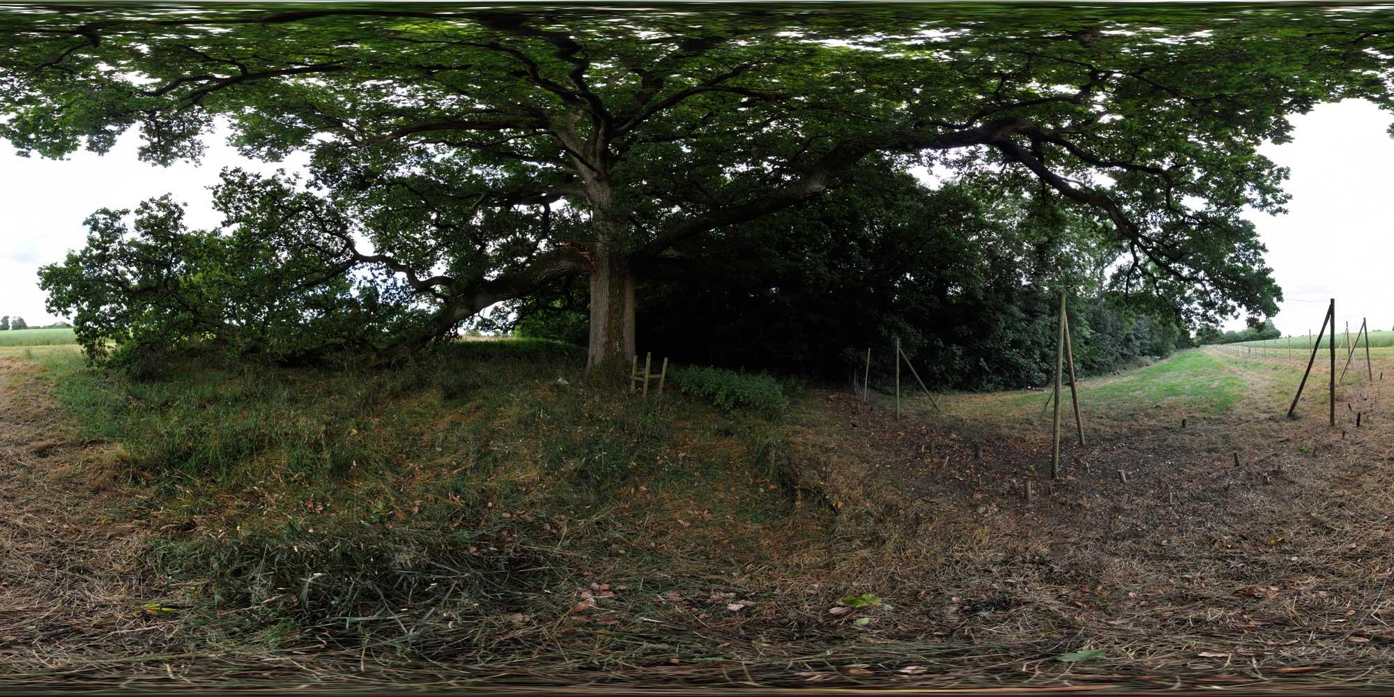 oaktree3