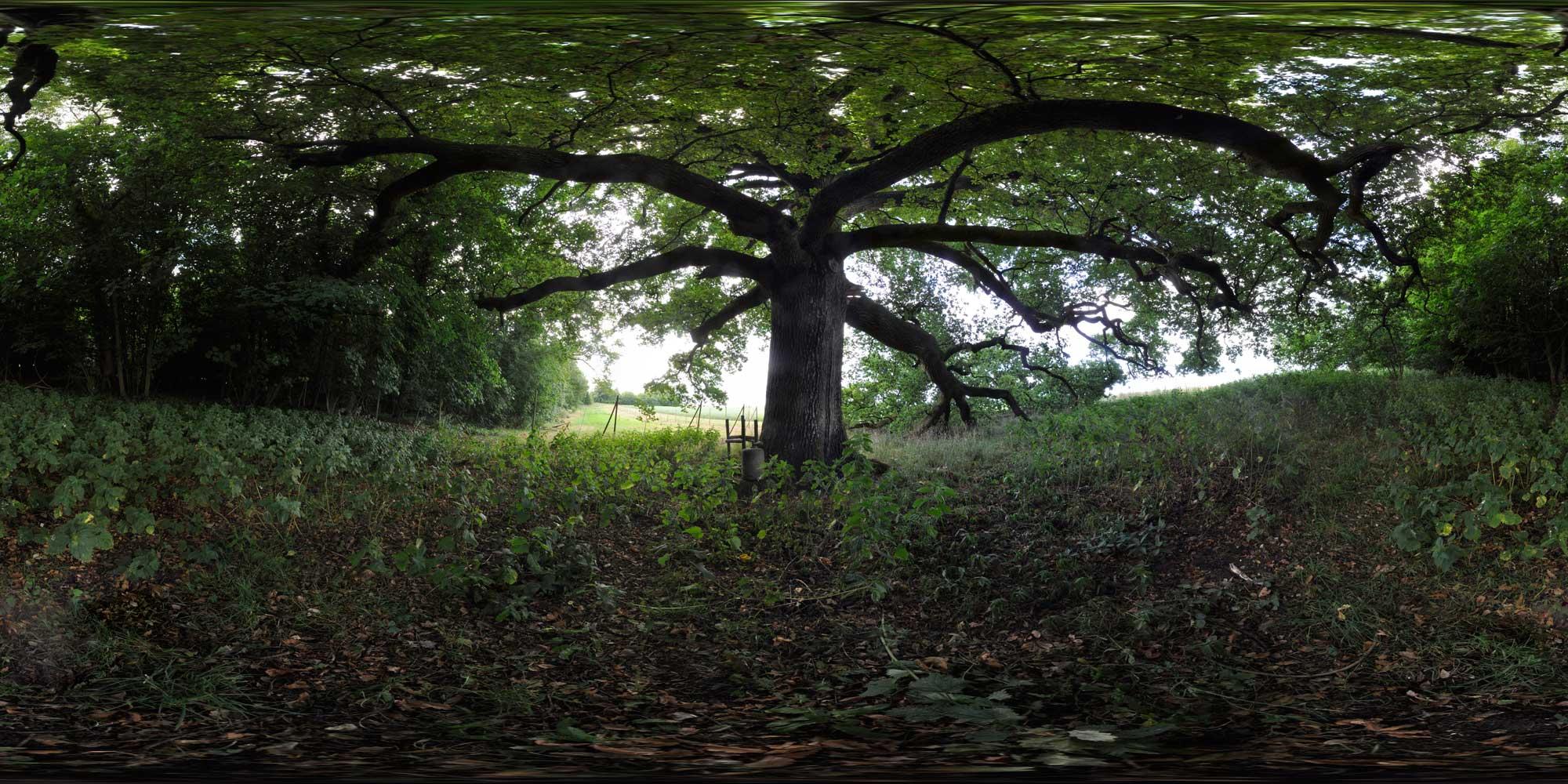 oaktree4